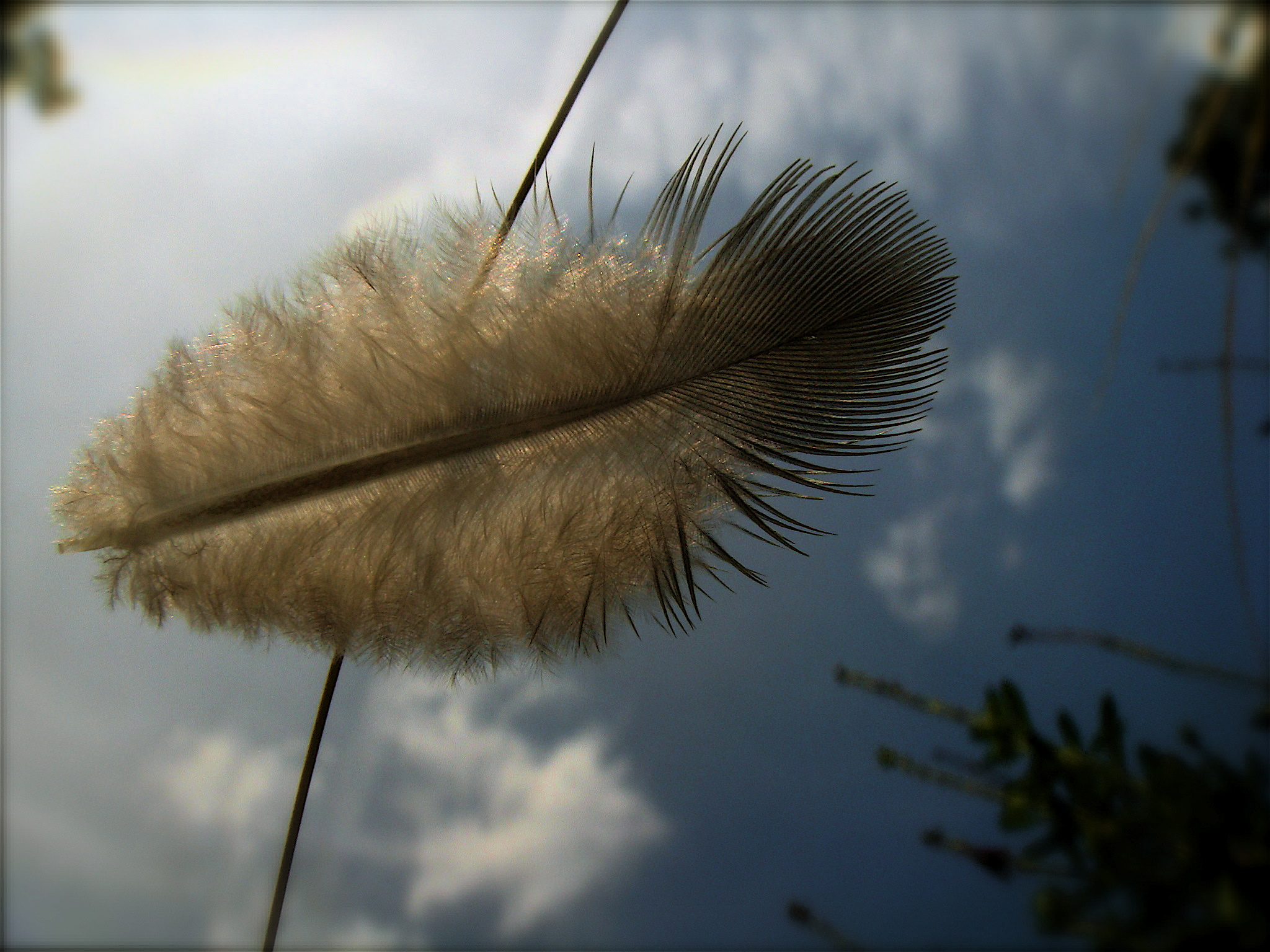 Feather on Feather Grass